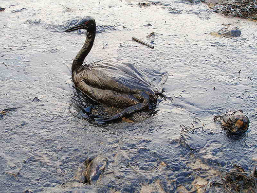 The oil spill is causing tremendous damage to beaches, wildlife, wetlands and the economy across the Gulf coast.